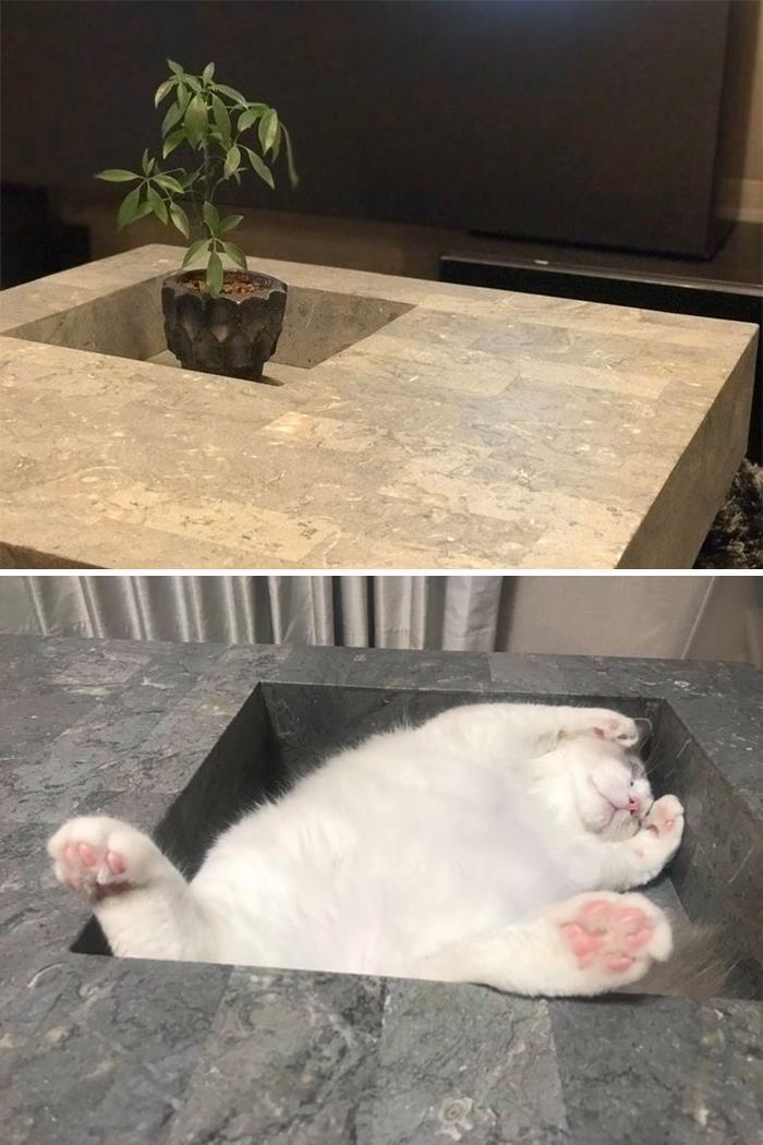 35 fotos de gatos hilariantes que você precisa ver 29