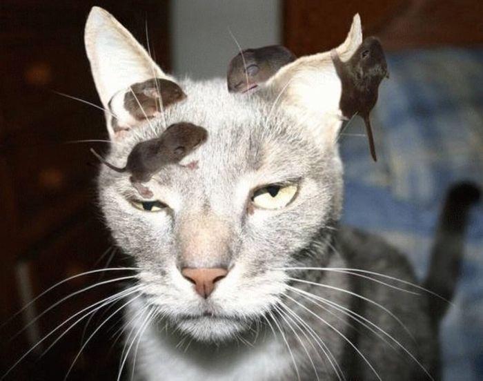 35 fotos de gatos hilariantes que você precisa ver 31