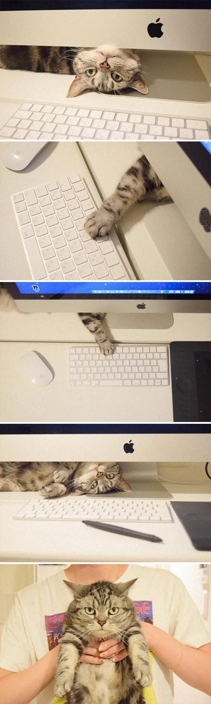 35 fotos de gatos hilariantes que você precisa ver 35