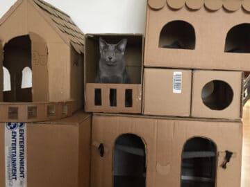 Com tédio na quarentena donos de gatos começaram a construir castelos de papelão 18
