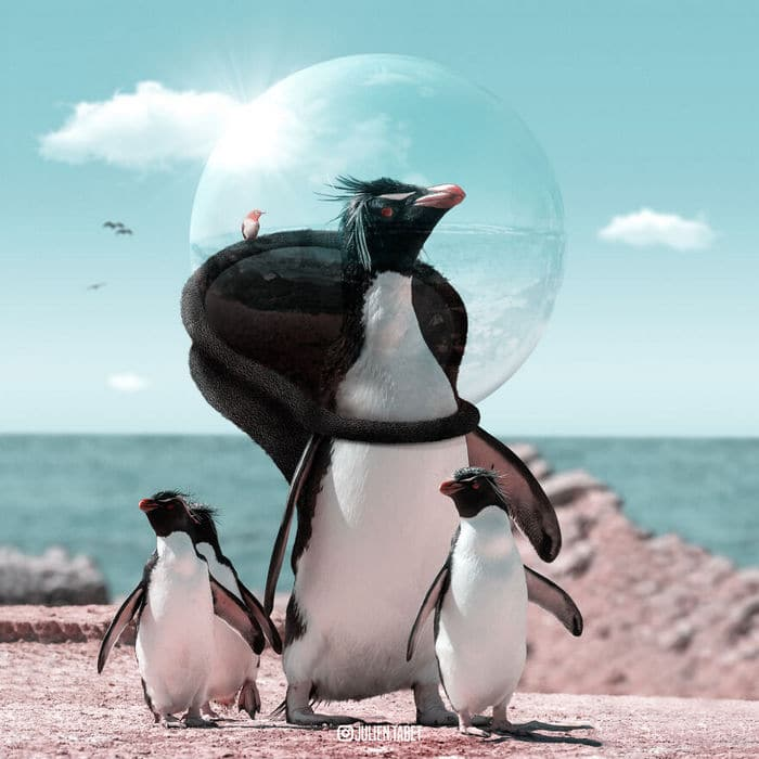 Aqui está o que eu imagino que os animais fazem quando não estamos olhando 9