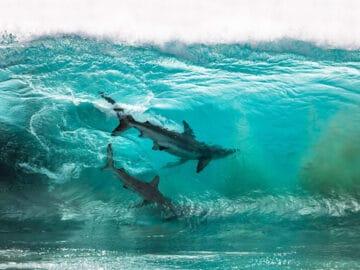 34 fotos incríveis do Ocean Photography Awards 2020 4