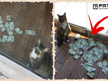 Gato surgia com muito dinheiro todos os dias, todos ficaram chocados quando descobriram de onde veio 2