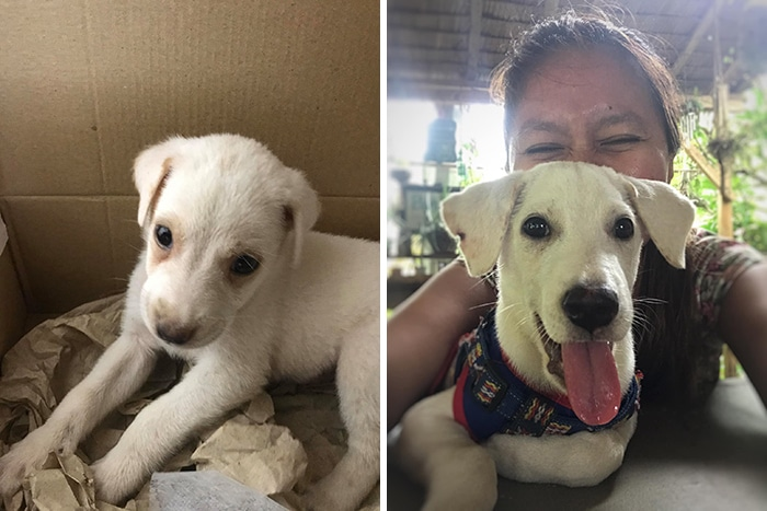 As pessoas estão compartilhando fotos lado a lado com seus animais para o Desafio de antes e agora 18