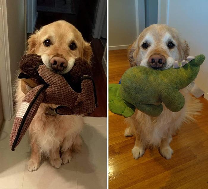 As pessoas estão compartilhando fotos lado a lado com seus animais para o Desafio de antes e agora 31