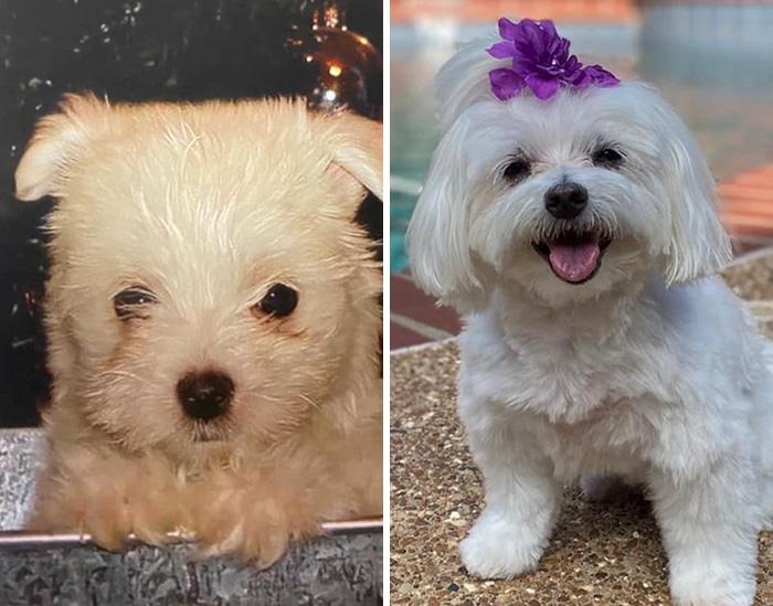 As pessoas estão compartilhando fotos lado a lado com seus animais para o Desafio de antes e agora 34