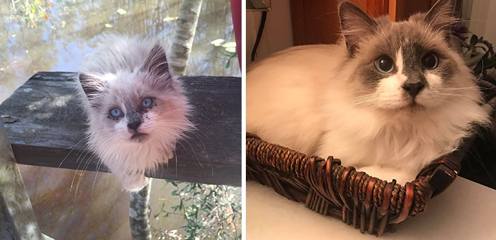 As pessoas estão compartilhando fotos lado a lado com seus animais para o Desafio de antes e agora 39