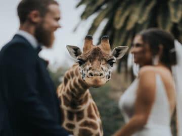 As 30 melhores fotos de casamentos de 2020 4