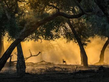 35 fotos incríveis e vencedoras do fotógrafo de natureza do ano de 2020 44