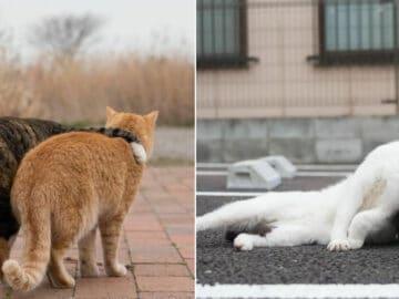 40 personalidades únicas de gatos de rua capturadas por este fotógrafo japonês 27