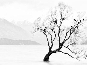 40 fotos da natureza de tirar o fôlego que ganharam o 2020 International Photography Awards 10