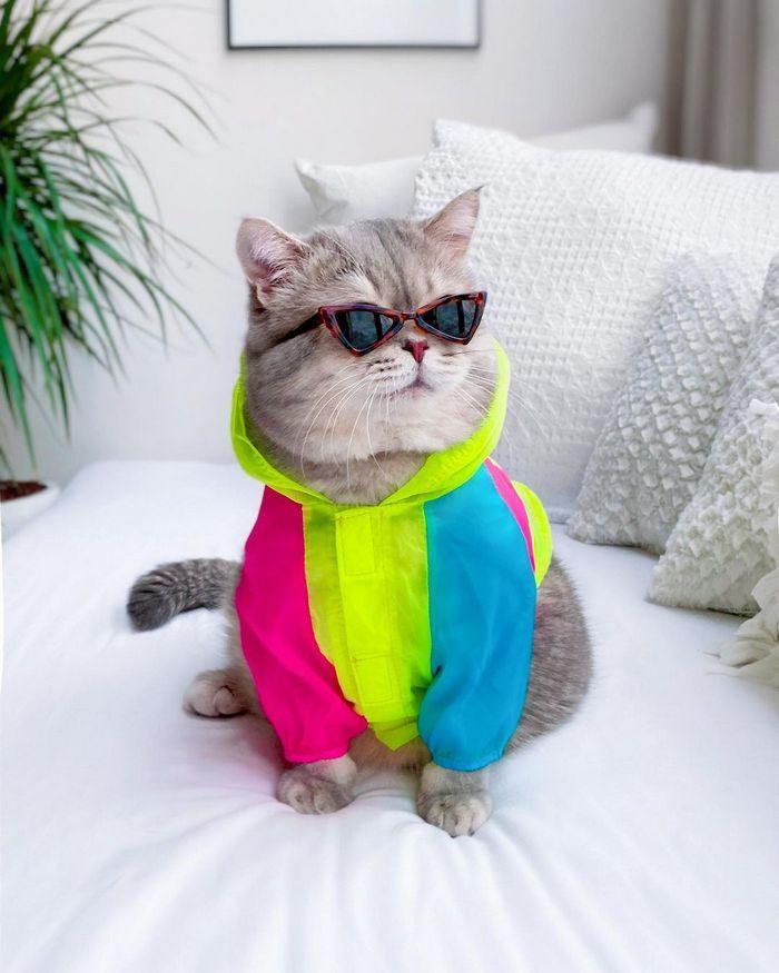 O gatinho abandonado que virou influencer de moda após ganhar um lar 4