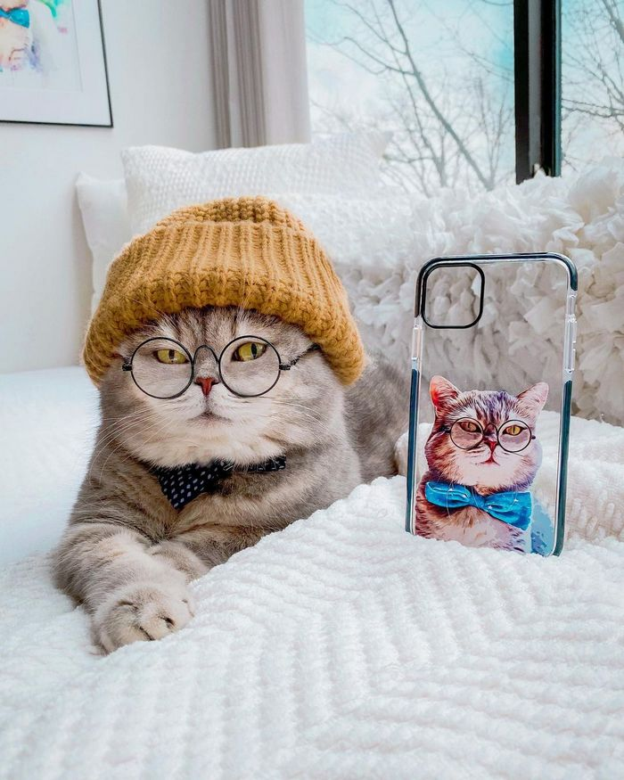 O gatinho abandonado que virou influencer de moda após ganhar um lar 7