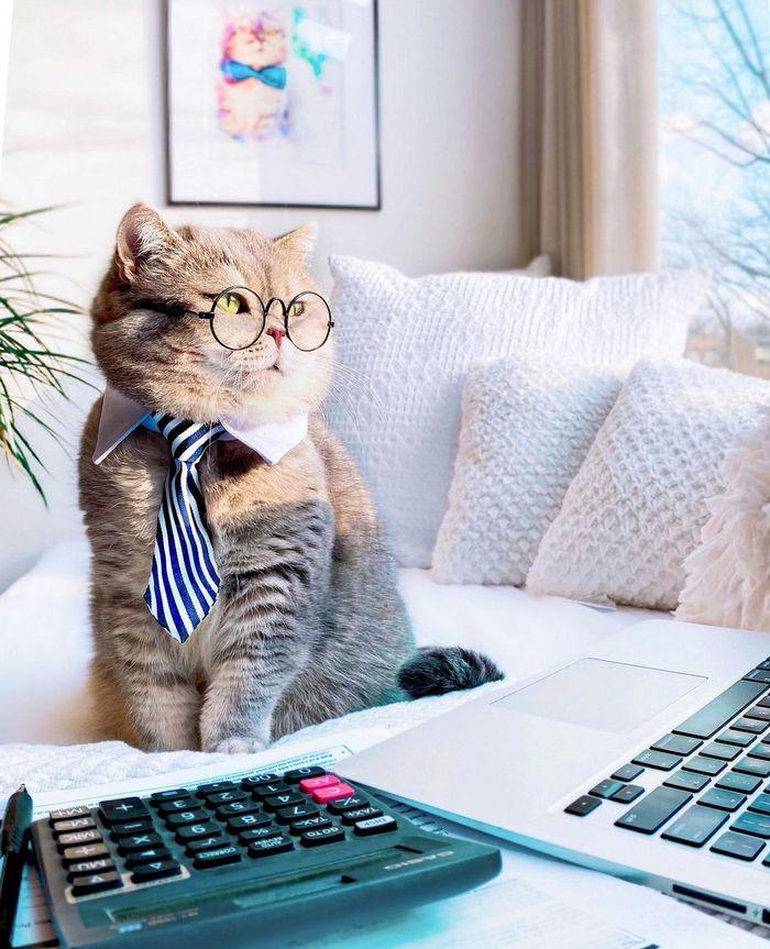 O gatinho abandonado que virou influencer de moda após ganhar um lar 8