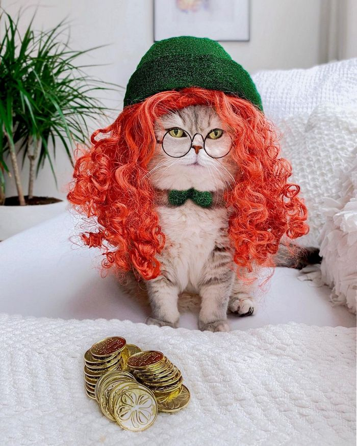 O gatinho abandonado que virou influencer de moda após ganhar um lar 9