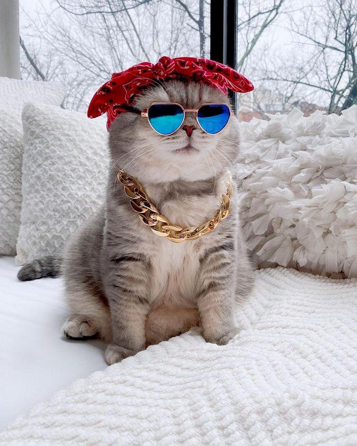 O gatinho abandonado que virou influencer de moda após ganhar um lar 12