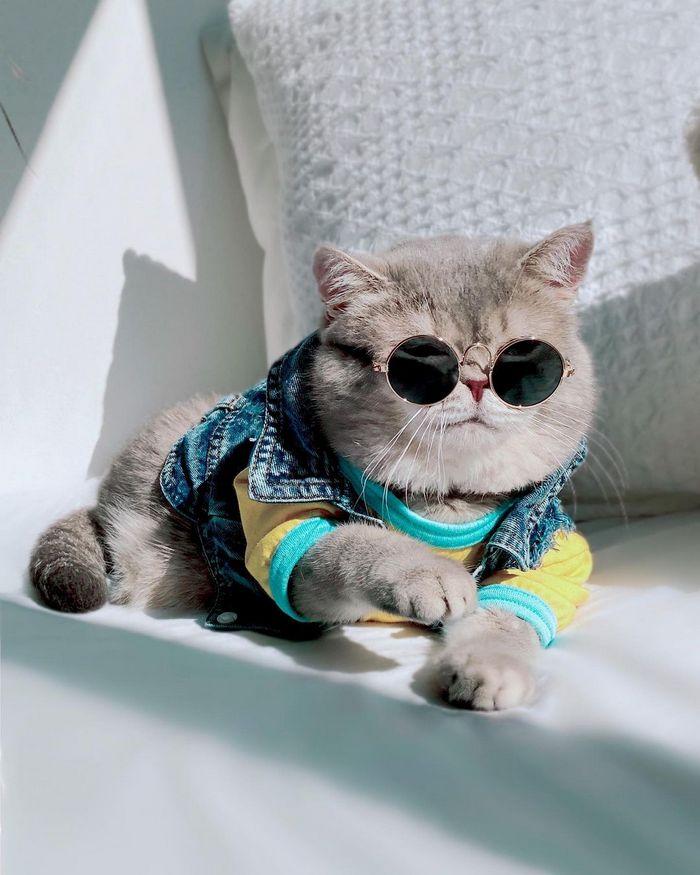 O gatinho abandonado que virou influencer de moda após ganhar um lar 15