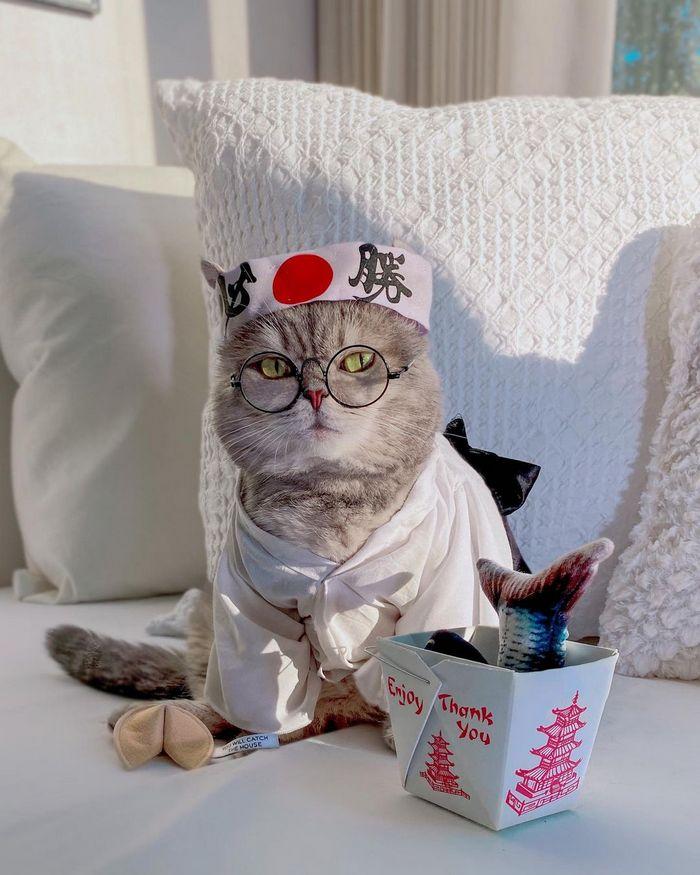 O gatinho abandonado que virou influencer de moda após ganhar um lar 17