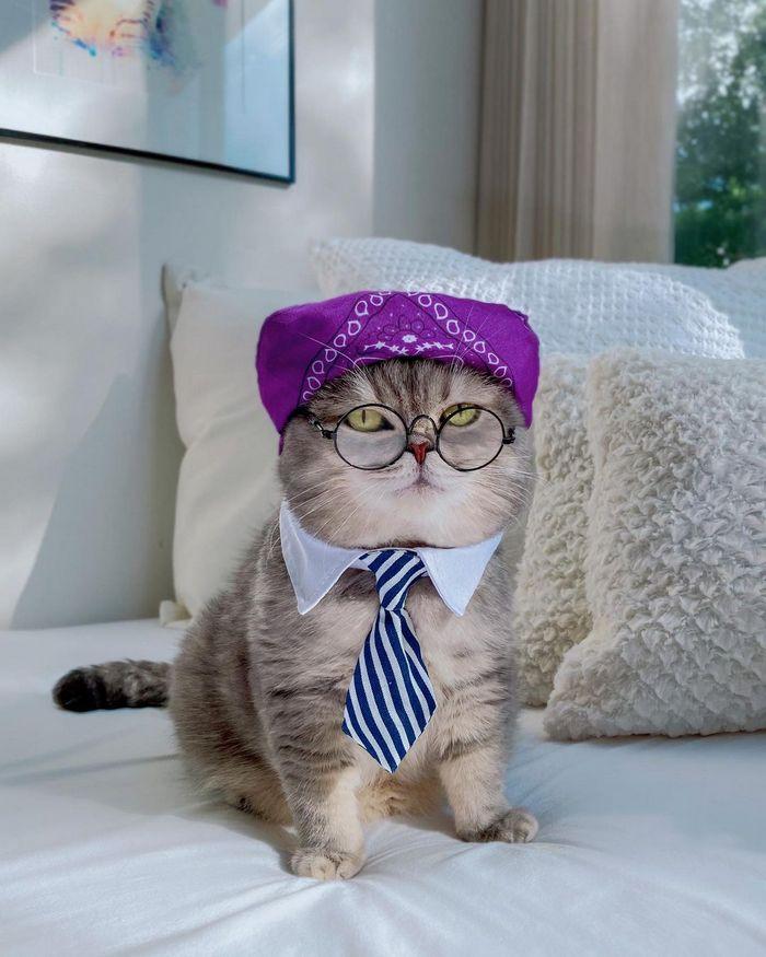 O gatinho abandonado que virou influencer de moda após ganhar um lar 19
