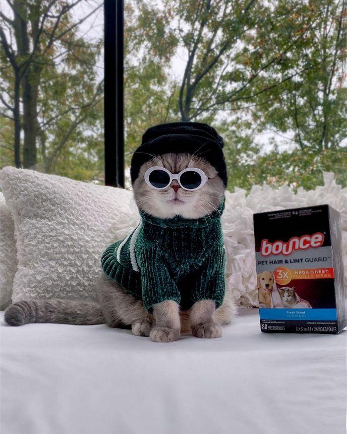 O gatinho abandonado que virou influencer de moda após ganhar um lar 20