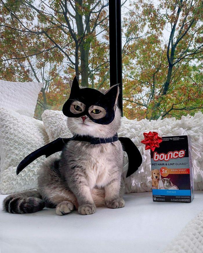 O gatinho abandonado que virou influencer de moda após ganhar um lar 21