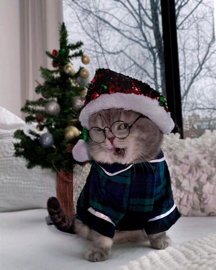 O gatinho abandonado que virou influencer de moda após ganhar um lar 22