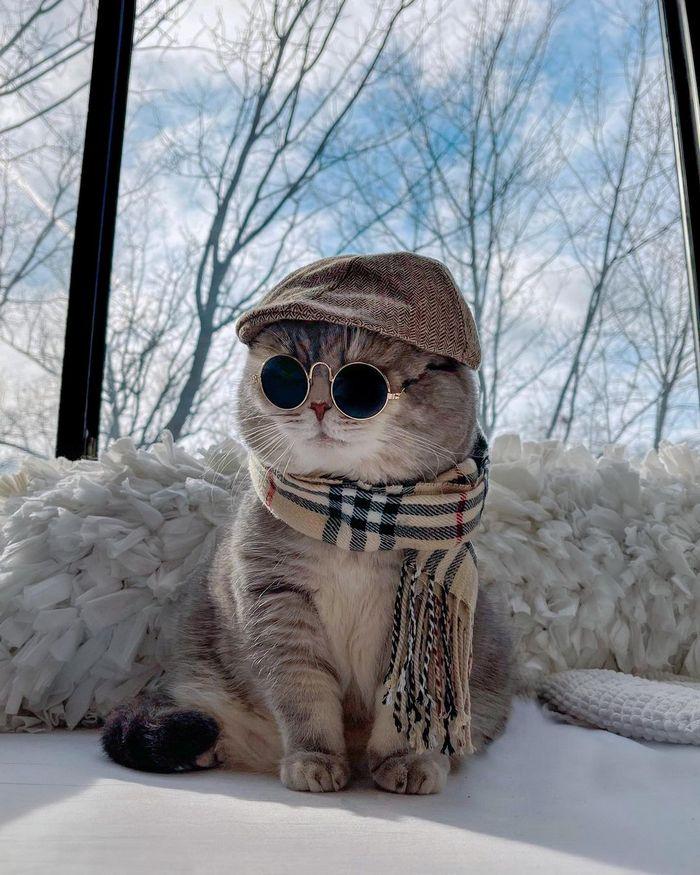 O gatinho abandonado que virou influencer de moda após ganhar um lar 23
