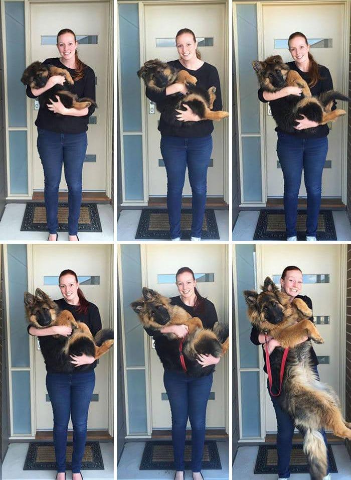 40 adoráveis cães antes e depois de crescer 5