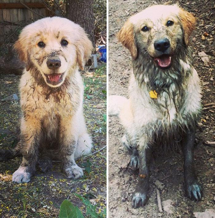 40 adoráveis cães antes e depois de crescer 6