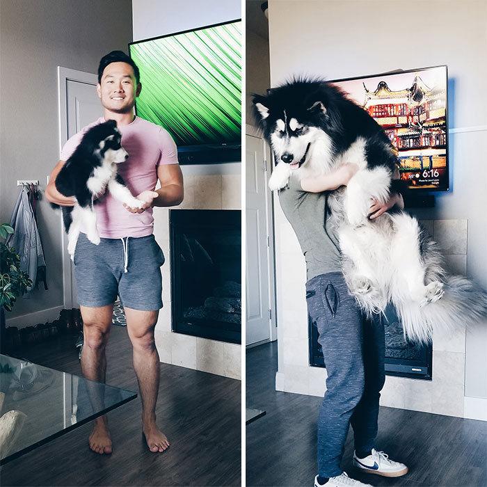 40 adoráveis cães antes e depois de crescer 7