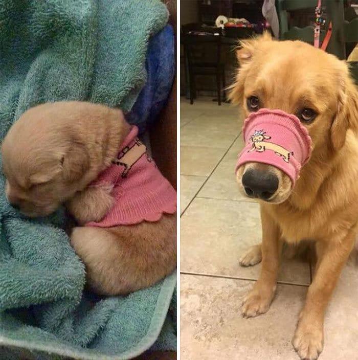 40 adoráveis cães antes e depois de crescer 12