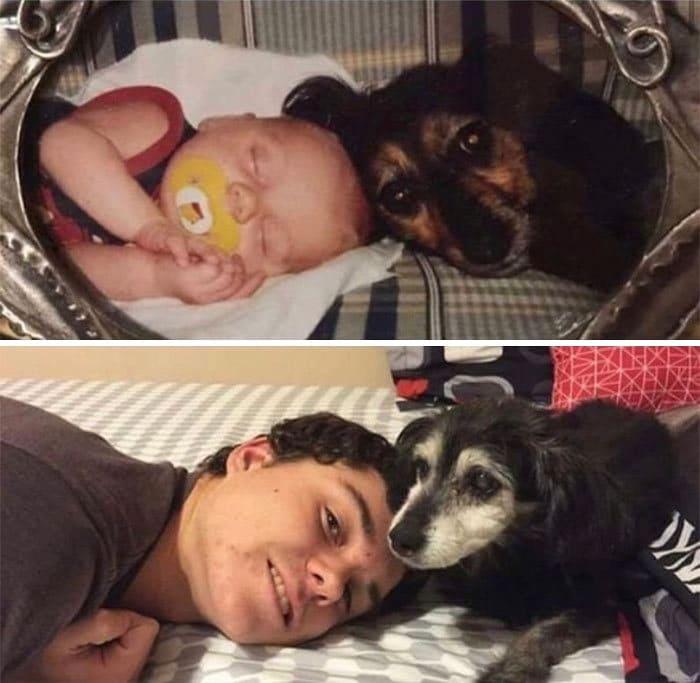 40 adoráveis cães antes e depois de crescer 15