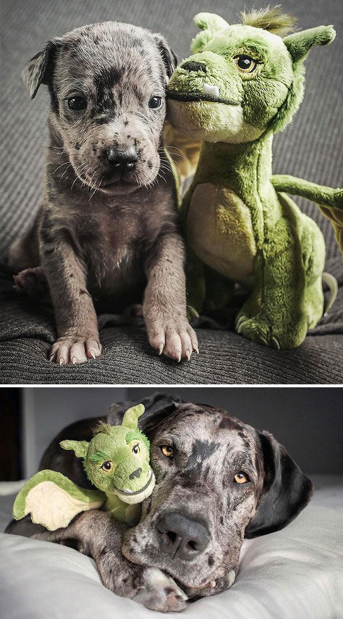 40 adoráveis cães antes e depois de crescer 20