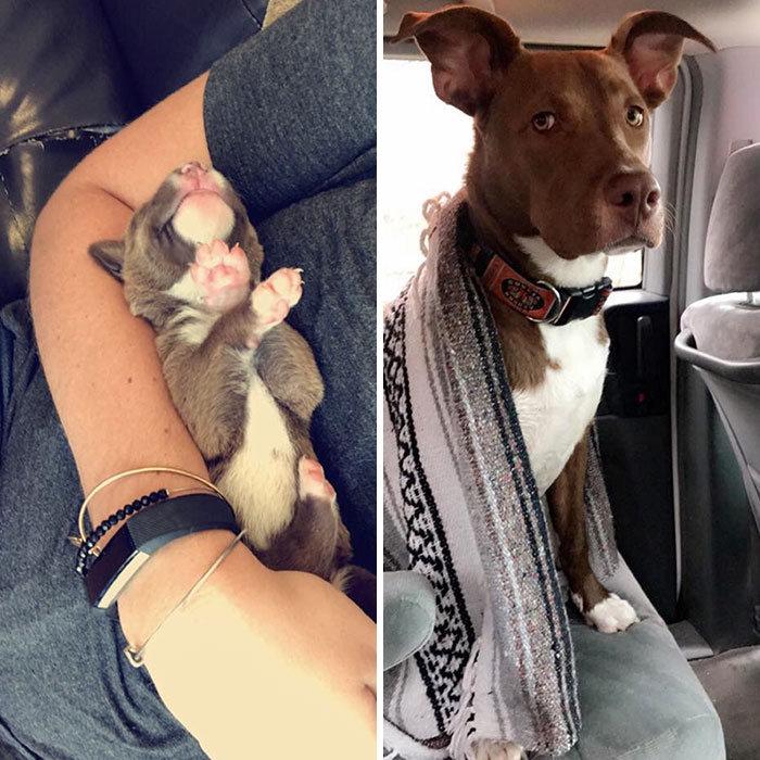 40 adoráveis cães antes e depois de crescer 22