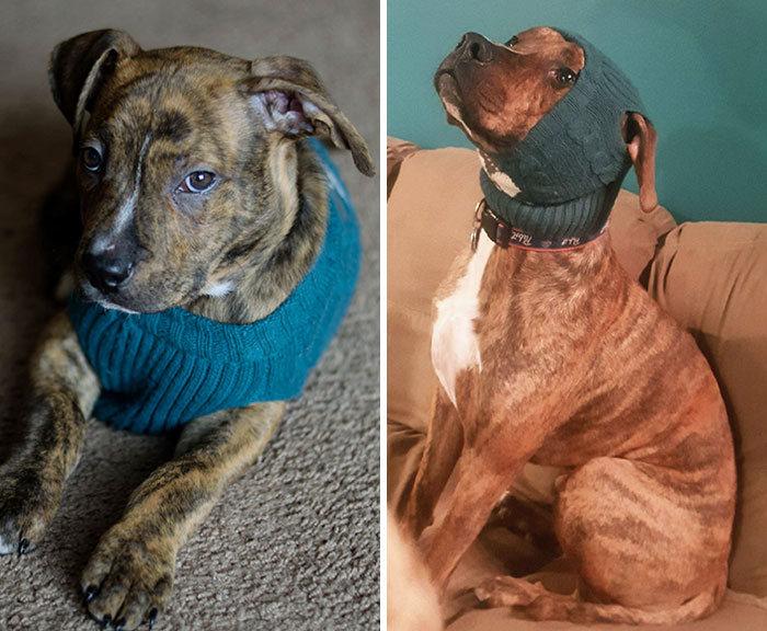 40 adoráveis cães antes e depois de crescer 23