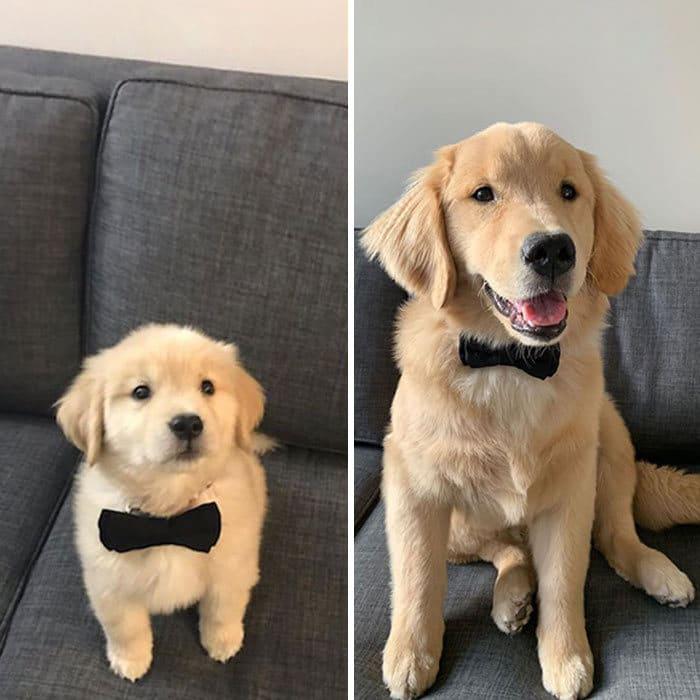 40 adoráveis cães antes e depois de crescer 28