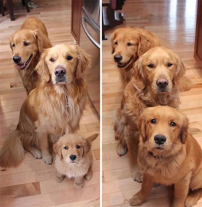 40 adoráveis cães antes e depois de crescer 31