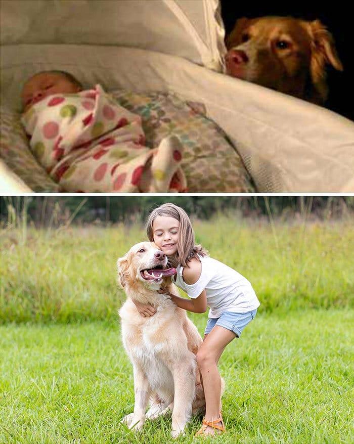 40 adoráveis cães antes e depois de crescer 41