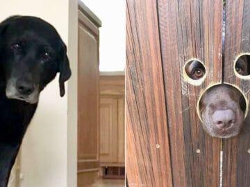 40 cães curiosos que observam tudo o que está acontecendo ao seu redor 1