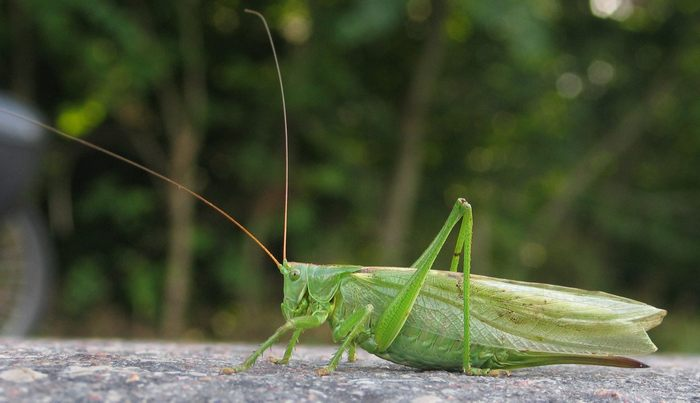 Rapaz não suporta mais o barulho do inseto, ele teve uma ideia 4