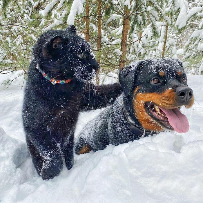 Pantera rejeitada pela mãe conquista internet ao lado do irmão Rottweiler 23