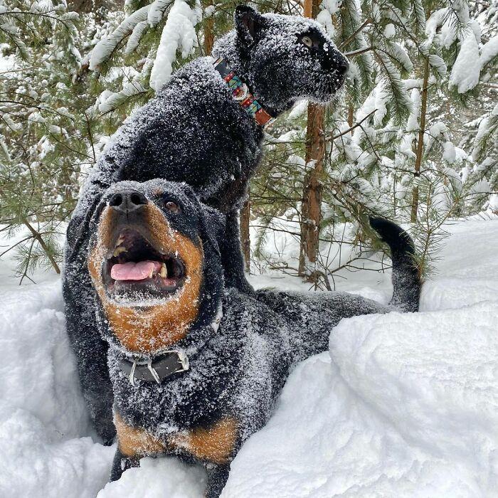 Pantera rejeitada pela mãe conquista internet ao lado do irmão Rottweiler 24