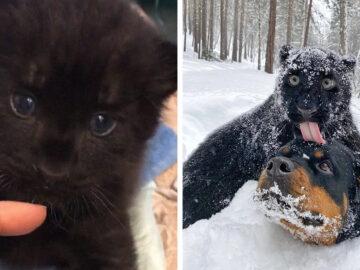 Pantera rejeitada pela mãe conquista internet ao lado do irmão Rottweiler 2