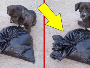 As 2 histórias de cachorros incríveis 4
