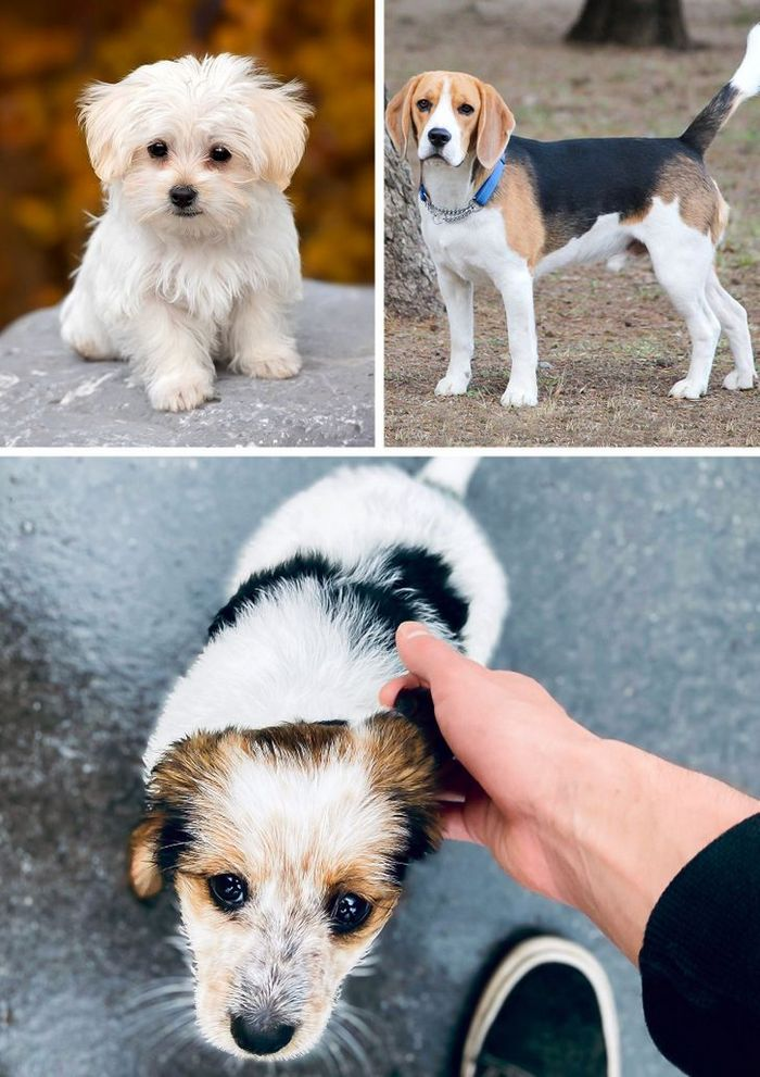 17 cachorros híbridos que dão um show de beleza e fofura 18