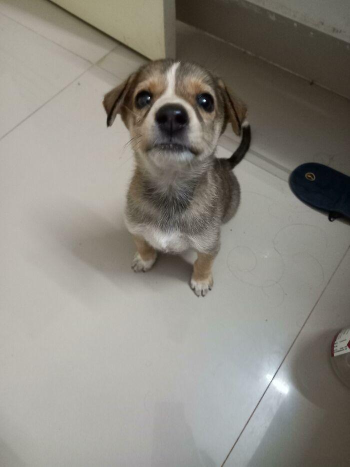 30 fotos de animais de estimação que foram adotados em maio 10
