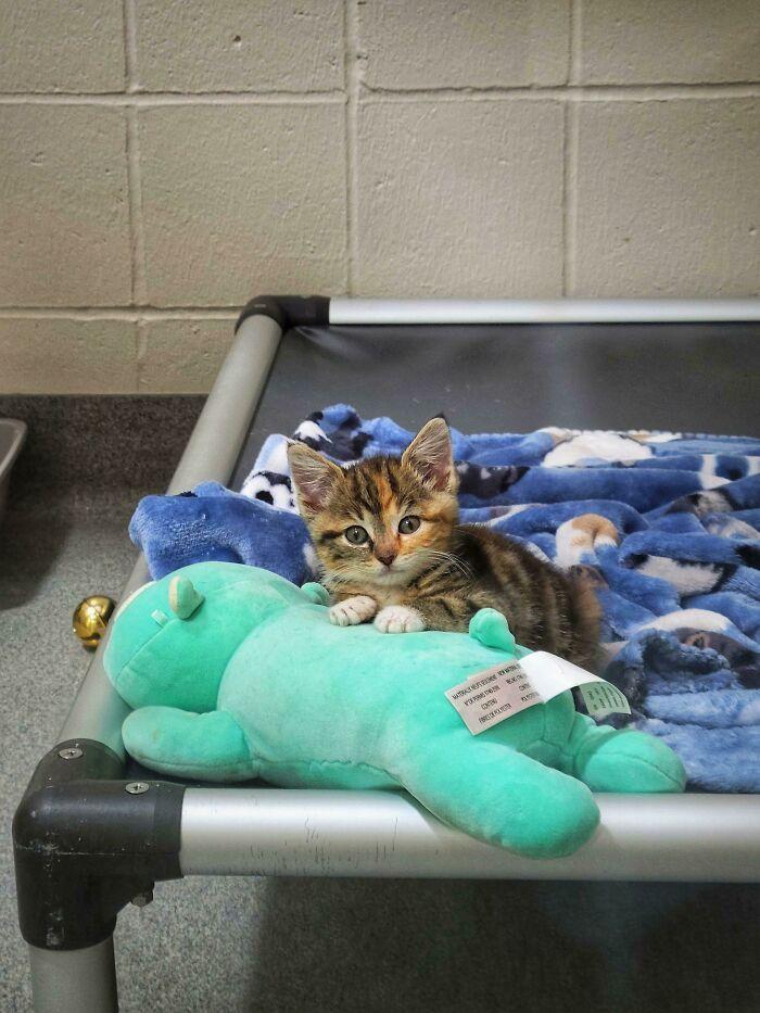 30 fotos de animais de estimação que foram adotados em maio 26