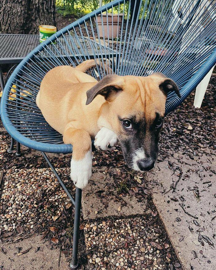30 fotos de animais de estimação que foram adotados em maio 28