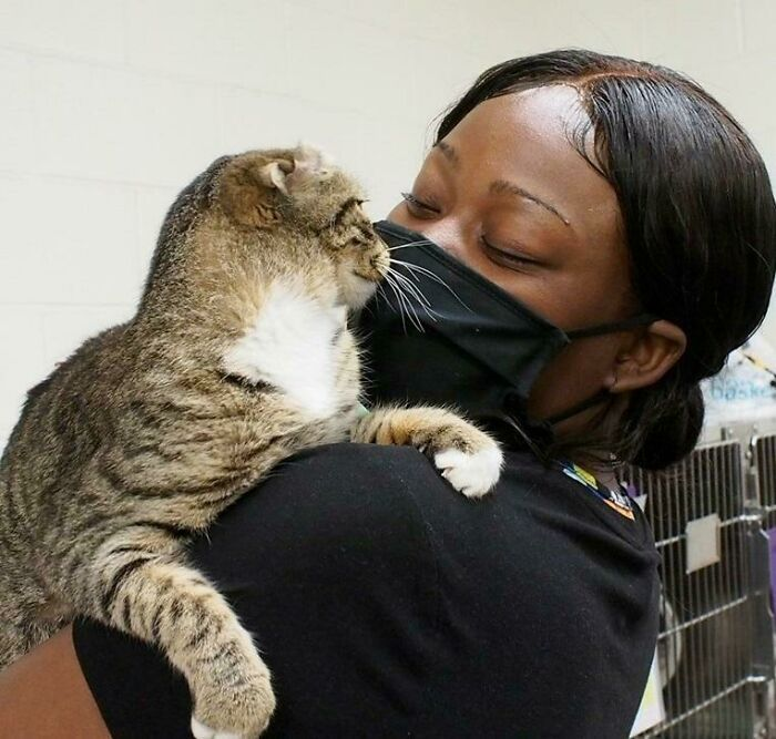 30 fotos de animais de estimação que foram adotados em maio 30