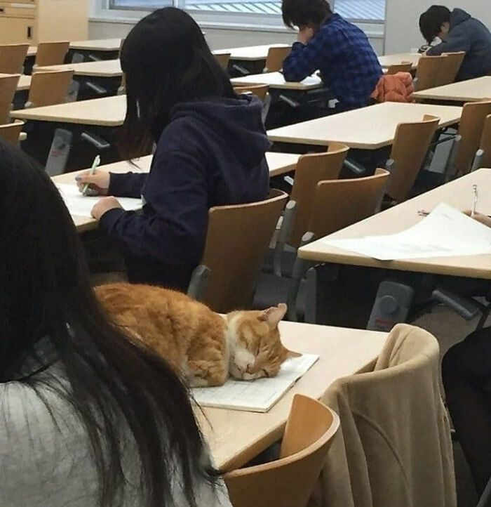 40 fotos de gatos em lugares que eles não deveriam estar 3